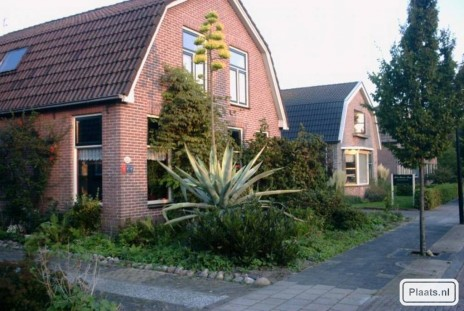 Deze Agave staat schuin t.o...
